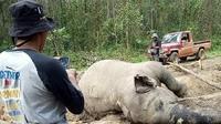 Gajah mati diduga akibat perburuan ilegal di Provinsi Riau. (Liputan6.com/M Syukur)