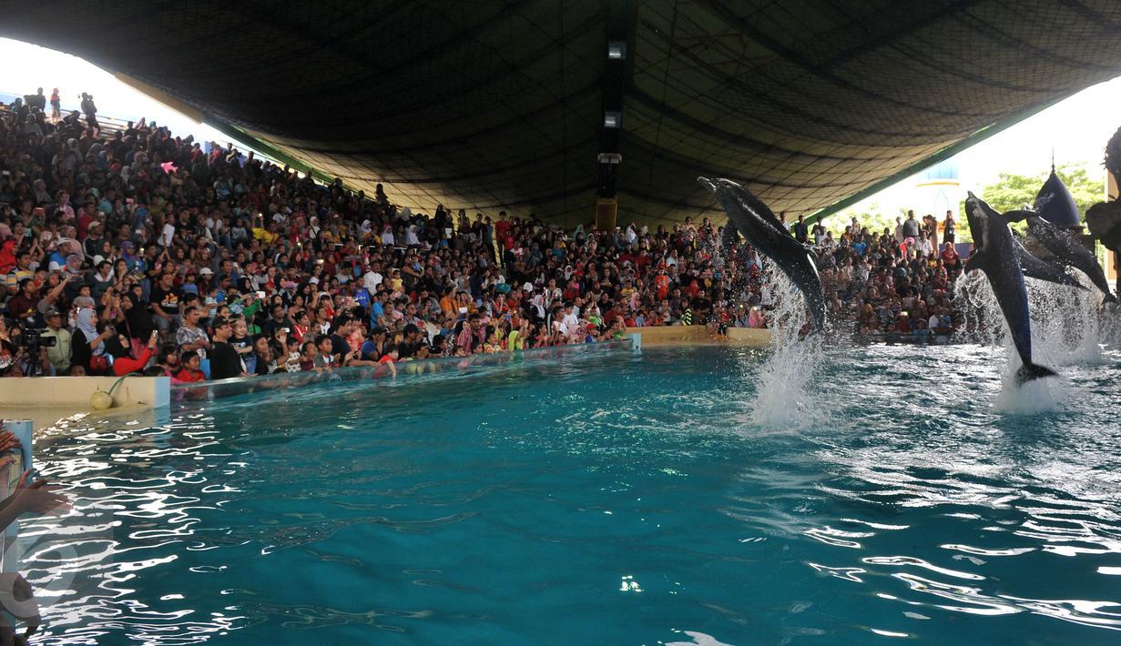 Pengunjung melihat atraksi lumba-lumba di kawasan wisata Ancol, Jakarta, Senin (8/2). Dalam rangka liburan Imlek, Ancol menampilkan pertunjukan lumba-lumba berkolaborasi dengan barongsai untuk menghibur wisatawan. (Liputan6.com/JohanTallo)