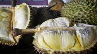 Menikmati legitnya durian unggulan Banyumas. (Liputan6.com/Muhamad Ridlo)