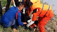 Petugas mengevakuasi jasad nenek yang ditemukan mengapung di Sungai Siak. (Liputan6.com/M Syukur)
