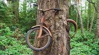 (Images: The Vintage News) Sepeda yang dimakan pohon di Vashon Island, Washington.
