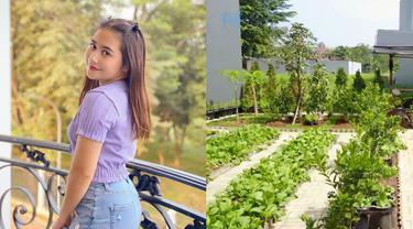 Potret Kebun Organik Milik Prilly Latuconsina, Ada Sayur Hingga Buah-buahan