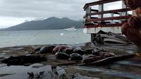 Warna air laut di Ternate mulai berubah beberapa hari terakhir. Kondisi itu ditemukan di beberapa titik pada kedalaman laut 5 sampai 23 meter. (Liputan6.com/ Hairil Hiar)
