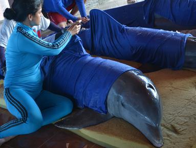 Petugas menyiapkan lumba-lumba untuk dipindahkan ke Dolphinarium di Cienfuegos, Kuba (8/9). Lumba-lumba ini dipindahkan dari dolphinarium Cayo Guillermo menyusul datangnya badai Irma. (Osvaldo Gutierrez Gomez / ACN via AP)