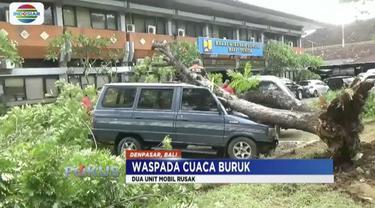 Hujan kencang membuat pohon tumbang serta timpa pemotor hingga tewas.