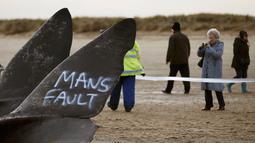 Wisatawan mengambil gambar dua bangkai paus sperma yang tergeletak di atas pasir setelah terdampar di pantai Skegness, Inggris, Senin (25/1). Menurut media setempat, tiga paus sperma ditemukan mati terdampar pada akhir pekan lalu. (REUTERS / Andrew Yates)