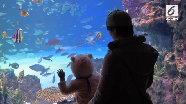 Sebuah pusat perbelanjaan menghadirkan akuarium raksasa. Ada 37.000 jenis hewan laut yang dipamerkan termasuk sejumlah reptil.