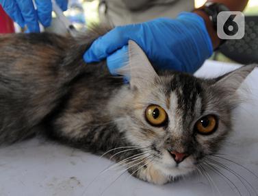 FOTO: Suntik Rabies Gratis untuk Hewan Peliharaan di Jakarta