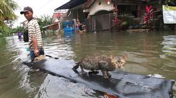 Warga menyelamatkan kucing peliharaannya dengan sebatang kayu ketika banjir melanda kawasan Periuk, Tangerang, Banten, Selasa (10/2). (ANTARA FOTO/Rivan Awal Lingga)