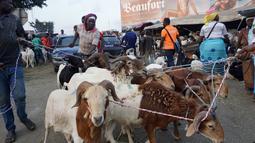 Kawanan domba yang akan dijual untuk perayaan Idul Adha di sebuah pasar kawasan Abidjan, Pantai Gading, Jumat (17/8). Umat Islam di seluruh dunia akan merayakan Hari Raya Idul Adha yang identik dengan tradisi berkurban. (AFP/ISSOUF SANOGO)