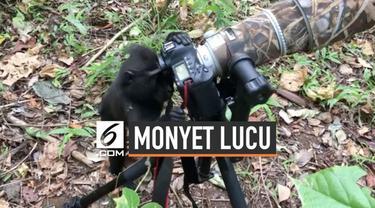 Seekor monyet di Cagar Alam Tangkoko coba bergaya layaknya fotografer dan coba mengutak-atik kamera milik ahli biologi asal Denmark.