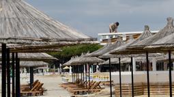 Seorang pekerja memperbaiki atap bar di sebuah pantai di Qerret, dekat kota Kavaja, Albania pada 1 Juni 2020. Rencananya pada 6 Juni mendatang, semua pantai umum akan dibuka untuk wisatawan setelah Albania menerapkan langkah-langkah pelonggaran pencegahan virus corona. (SHKULLAKU / AFP)