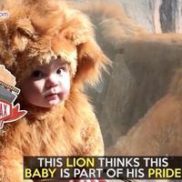 Begini Reaksi Singa Saat Lihat Bayi Pakai Baju Ini