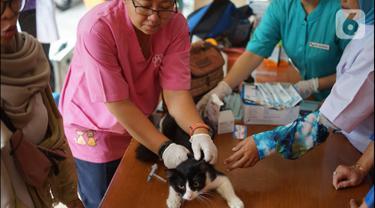 Petugas kesehatan hewan memberikan vaksin rabies pada kucing di kawasan Sawah Besar, Jakarta, Kamis (3/9/2019). Dalam rangka memperingati Hari Rabies Sedunia, Sudin Ketahanan Pangan Kelautan dan Perikanan DKI Jakarta melakukan vaksinasi hewan secara gratis. (Liputan6.com/Immanuel Antonius)