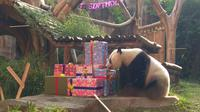 Panda raksasa di Taman Safari (Liputan6.com/ Achmad Sudarno)