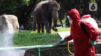 Petugas pemadam kebakaran Sudin Jaksel melakukan penyemprotan disinfektan di sekitar kandang gajah di Kebun Bintang Ragunan, Jakarta, Rabu (17/6/2020). Penyemprotan dilakukan jelang pembukaan kembali Kebun Binatang Ragunan untuk umum pada 20 Juni mendatang. (merdeka.com/Arie Basuki)