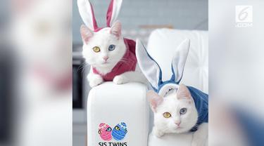 Karena penampilan uniknya, sang pemilik pun membuatkan akun Instagram khusus untuk kucing kesayangannya itu. Semua pengikutnya pun tampak terpesona dengan matanya yang bening namun memiliki warna berbeda.