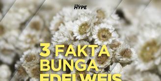Apa saja fakta menarik dibalik bunga edelweis? Yuk, kita cek video di atas!