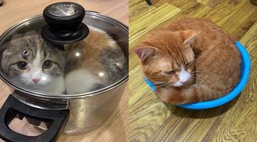 6 Kelakuan Pemilik Kucing ke Peliharaannya Ini Nyeleneh, Ada yang Dimasukkan Keresek