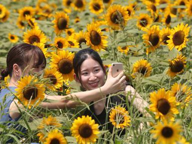 Pengunjung berswafoto di lautan bunga matahari yang bermekaran penuh di taman Yokosuka dekat Tokyo, Senin (17/8/2020). Bunga ini adalah bunga yang dikenal masyarakat Jepang sebagai bunga musim panas. (AP Photo/Koji Sasahara)