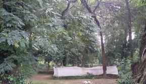 Lokasi Situs Makam Gedong Ageng Jipang yang berada di Desa Jipang, Kecamatan Cepu, Kabupaten Blora (Liputan6.com/ Ahmad Adirin)