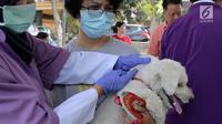 Petugas menyuntikkan vaksin rabies kepada anjing di perumahan Jakarta Timur, Rabu (3/10). Selain menyuntikkan vaksin rabies petugas juga memasang micro chip ke tubuh hewan peliharaan. (Merdeka.com/Imam Buhori)