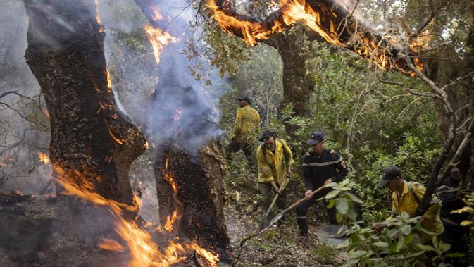 Petugas pemadam kebakaran berjuang melawan kebakaran hutan di wilayah Chefchaouen, Maroko, 17 Agustus 2021 (FADEL SENNA/AFP)