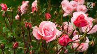 Ilustrasi Bunga Mawar (iStockphoto)
