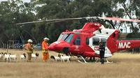 Sebuah helikopter bantuan kedaruratan terpaksa batal lepas landas karena ditanduk segerombolan kambing.