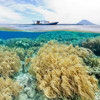 Taman Laut Bunaken, Sulawesi Utara. (Getty)