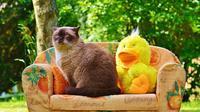 Memelihara hewan di rumah memang menyenangkan sekaligus menenangkan. Namun efek sampingnya adalah rumah kotor dan perabotan rusak.