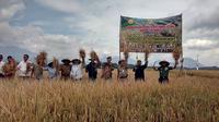 Dengan pengendalian swasembada padi hingga bisa menyambut panen raya, masih perlukah impor beras? (Liputan6.com/Jayadi Supriadin)