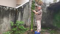 Masrukan, warga Polehan, Kota Malang menggunakan kursi plastik berdiri di samping pisang raja seribu yang tumbuh di pekarangan rumahnya (Liputan6.com/Zainul Arifin)