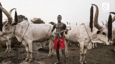 Keunikan sapi peliharaan Suku Mundari membuatnya jadi incaran maling. Tak heran mereka menjaganya dengan senjata laras panjang.