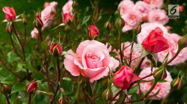 Ilustrasi Bunga Mawar