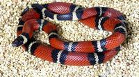 Ilustrasi ular (felipe/stockvault)