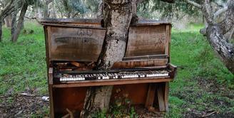 Sebuah piano tua di California ditumbuhi pohon tua dan besar. Seiring pertumbuhannya, si pohon membelah piano seolah-olah pohon tersebut tumbuh di antara piano. (Sumber: inovasee.com)