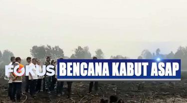 Bila melihat luasnya lahan yang terbakar, Jokowi menilai kebakaran ini merupakan kegiatan yang terorganisir.