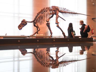 Orang-orang mengamati dinosaurus yang dipamerkan di Museum Institut Ilmu Pengetahuan Alam Kerajaan Belgia di Brussel, Belgia (15/9/2020). Museum ini membuka rute satu arah baru untuk menawarkan kepada publik cara yang aman untuk berkunjung di tengah pandemi COVID-19. (Xinhua/Zheng Huansong)