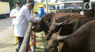 Pemeriksaan Kesehatan Hewan Kurban di Tengah Pandemi