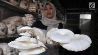 Petani menunjukkan hasil panen jamur tiram di kawasan Pulo Kambing, Jakarta, Rabu (26/12). Setiap harinya rumah jamur PKPK mampu memanen hingga 4 kilogram yang dijual dengan harga Rp 16 ribu per kilogram.  (Merdeka.com/Iqbal S. Nugroho)