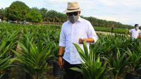 CEO PTPN V Jatmiko K Santosa meninjau salah satu lokasi pembibitan sawit unggul PTPN V yang kini dijual secara online. (Liputan6.com/M Syukur)