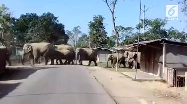 Kawanan gajah keluar dari hutan dan memasuki desa di India. Peristiwa ini membuat panik warga sekitar.