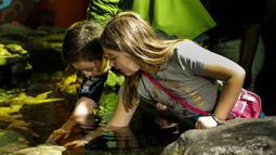 Anak-anak menyentuh seekor bintang laut di Shedd Aquarium di Chicago, Amerika Serikat (17/2/2020). Shedd Aquarium  memiliki koleksi 32.000 ekor binatang dan menarik sekitar 2 juta pengunjung setiap tahun. (Xinhua/Joel Lerner)