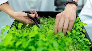 Isi Masa Pandemi, Mari Berkebun Sayuran di Rumah