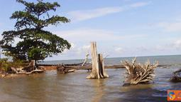 Citizen6, Bangka Belitung: Tumbuhan terancam punah disebabkan ulah tangan-tangan jahil, mengambil besi-besi di sepanjang bibir pantai yang berfungsi sebagai pemecah ombak. (Pengirim: Muhamad Fatih)