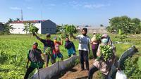 Terapi Bertani Menyehatkan Jiwa ala Puskesmas Kasihan II Bantul