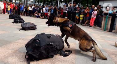 Satuan Polisi Satwa K9 bersama anjing pelacak khusus melakukan simulasi pendeteksian bahan peledak di area Car Free Day,Bundaran HI, Jakarta, Minggu, (16/2/2020). Simulasi untuk mengedukasi tentang cara kerja anjing pelacak saat menemukan bahan peledak yang disembunyikan. (Liputan6.com/Johan Tallo)
