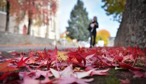 Gambar 18 Oktober 2018 memperlihatkan dedaunan jatuh ke tanah saat musim gugur di depan gereja Sainte-Bernadette, Orvault, Prancis. Musim gugur ditandai dengan perubahan warna daun serta bergugurannya daun-daun dari pohonnya. (LOIC VENANCE/AFP)