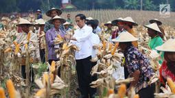 Presiden Joko Widodo (Jokowi) berdialog dengan petani saat panen raya jagung di Perhutanan Sosial, Ngimbang, Tuban, Jawa Timur, Jumat (9/3). Kegiatan ini merupakan rangkaian kunjungan kerja di Jawa Timur. (Liputan6.com/Angga Yuniar)